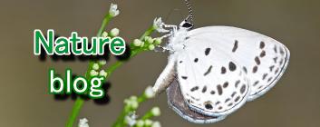 自然ブログ